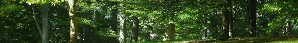 www.heiko-twiefel.de
